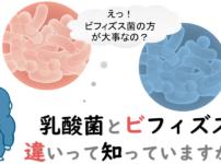 乳酸菌とビフィズス菌の違い